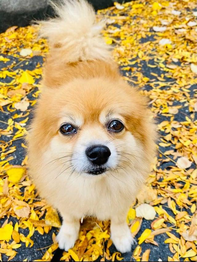 2021-09-bl-meet-team-hanzo-Mariana-Rosario-dog-Buddy-fall